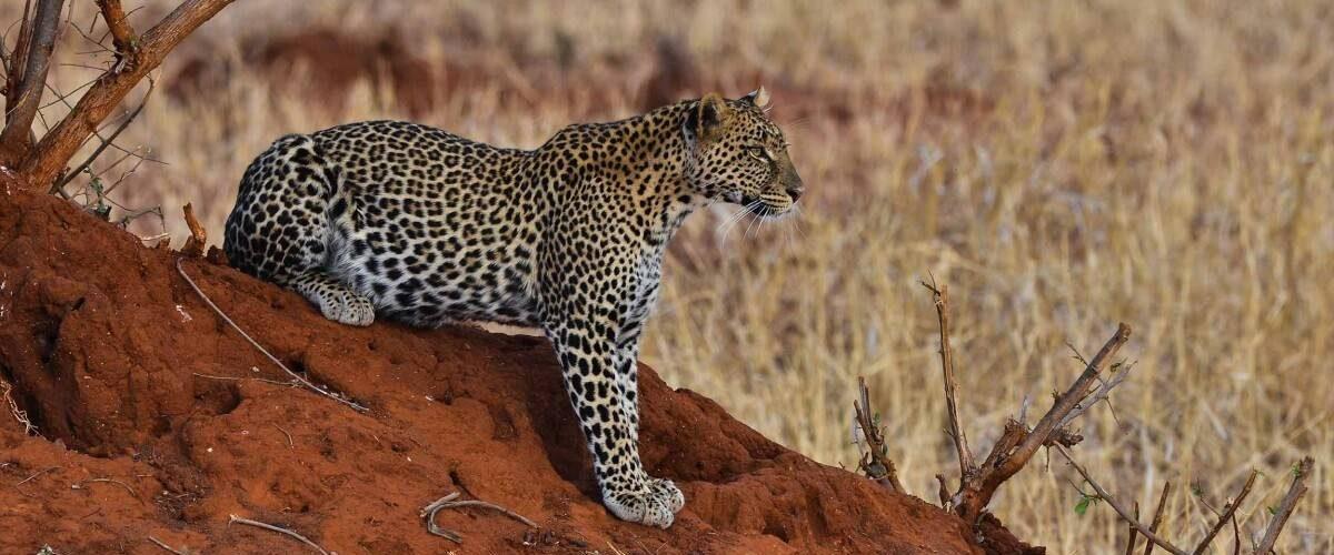 Best 5 Days Tanzania Big Cats Safari
