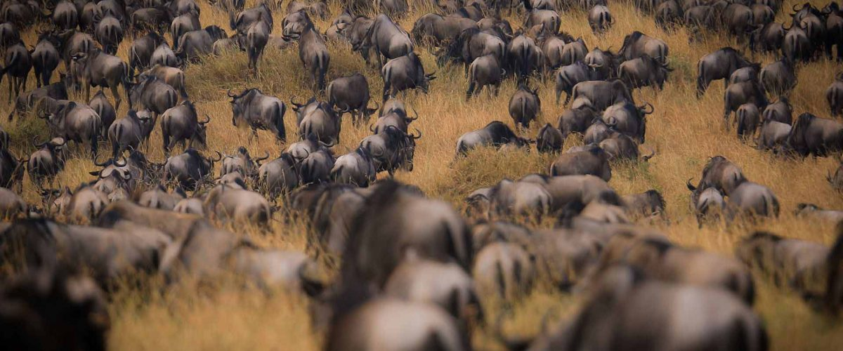 7 Days Tanzania Wildebeest Migration Safari