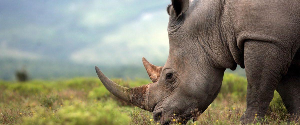 6 Days Tanzania Big Five Safari